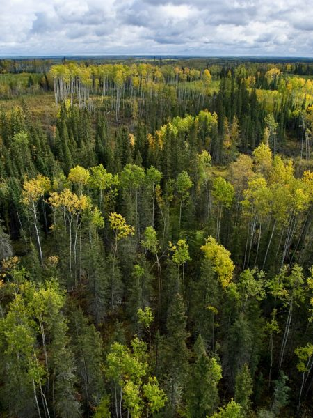 Celebrating collaborative efforts in the boreal forest