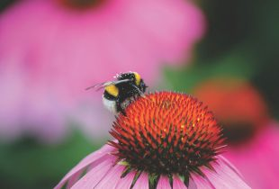 New research reveals how wetlands support prairie pollinators