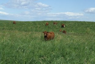 May the forage be with you and your herd: DUC/CPS forage program offers financial break for grassland conversions
