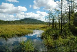 New detailed wetland mapping tools now available in Quebec