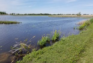 Ducks Unlimited Canada Celebrates Purchase of St. Luke's Marsh on Lake St. Clair