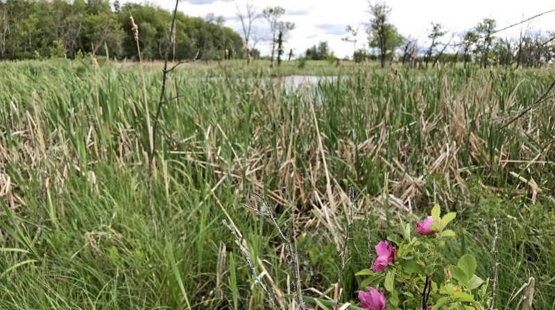 Conserving habitat with a history