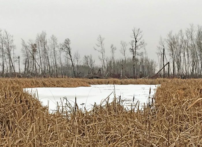 More than 42 acres (17 hectares) of wetlands and surrounding grass, shrubs and trees on the property will be conserved.