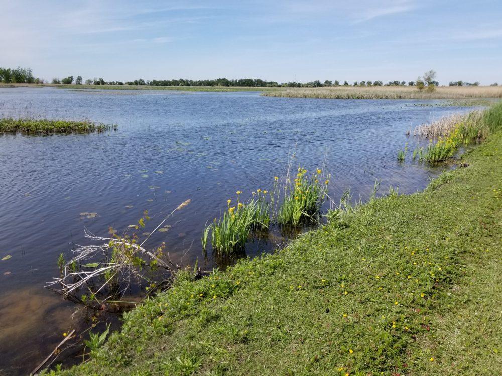 Ducks Unlimited Canada Celebrates Purchase of St. Luke's Marsh on Lake St. Clair