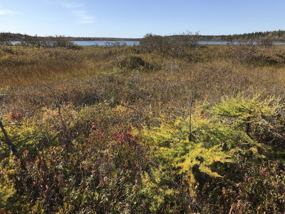 This bog sits between Morrison Lake and the surrounding upland.