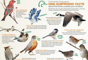 Surprising facts about backyard birds