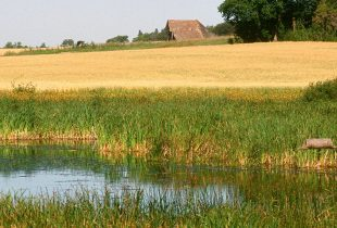 New wetland guide helps farmers manage water responsibly and tap new funding