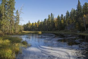 Conserving 54 million acres of Manitoba's boreal wetlands