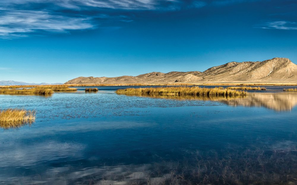 In Nevada—America's driest state—water is the most precious resource of all. Wetlands like these are a welcome, wet respite for people and waterfowl alike.