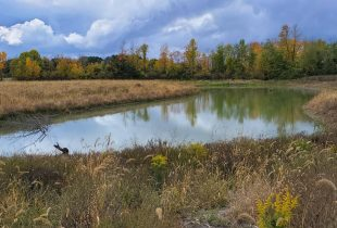 Natural infrastructure: more than jargon