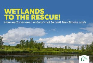 Wetlands to the Rescue