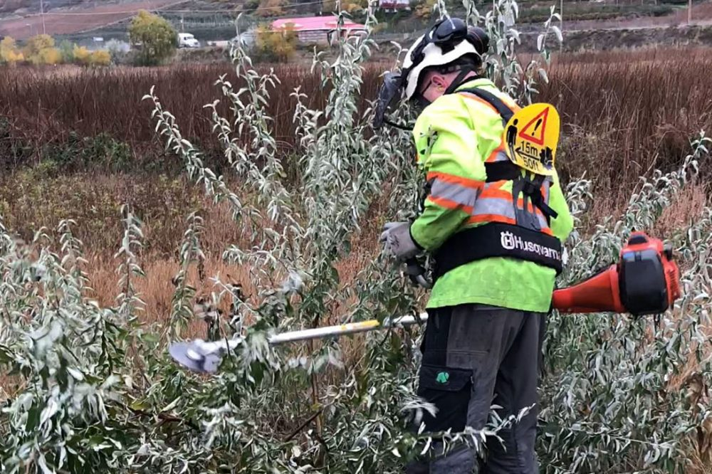 Introduced as an ornamental tree by gardening enthusiasts, DUC is fighting the invasive plant before it can take root across the Okanagan.