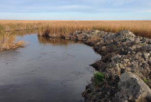 Illegal drainage threatens iconic Big Grass Marsh in Manitoba