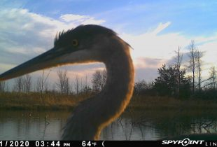 Wildlife Discover the New Wetland at Lennox Generating Station