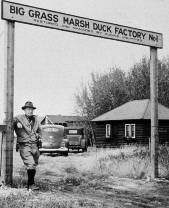 Big Grass Marsh in Manitoba is Ducks Unlimited Canada's first project built in 1938. It still supports waterfowl today.