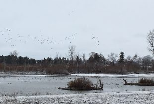 Birds and bird watchers will benefit from habitat improvements in Elgin County
