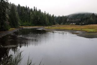 Wetland project will help B.C.'s salmon populations