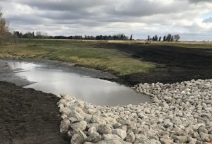 Wetland restoration and Alberta Wetland Policy benefit a farm family