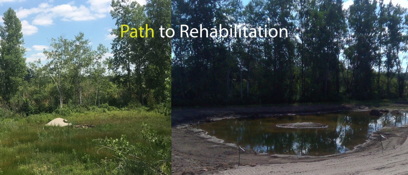2018-2020: The first step at Wise Pit was to remove the invasive plant, phragmites, before the new wetland could be constructed on the site.
