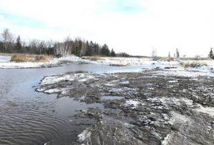 Re-wilding at Rivière du Nord