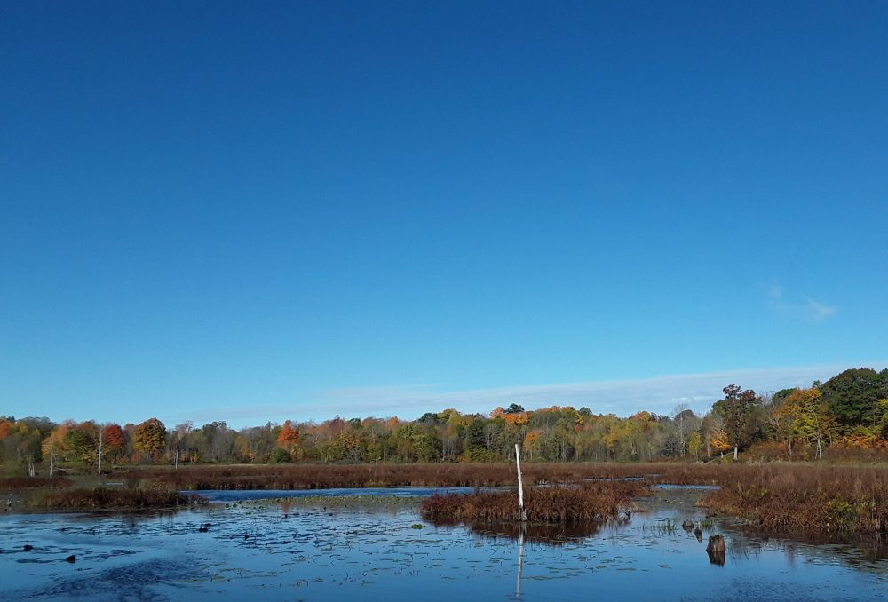 The McDougall Wetland Project