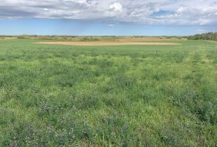 DUC's Revolving Land Conservation Program is on the mark