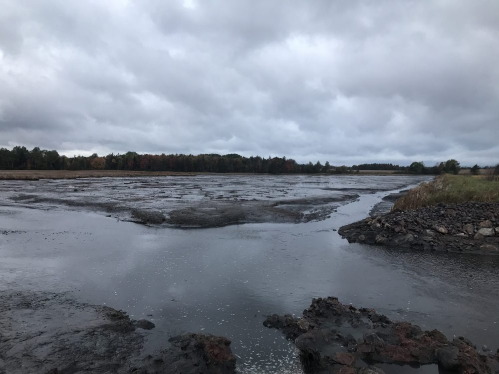 Exposed mudflats during low tide after breaching the dike.