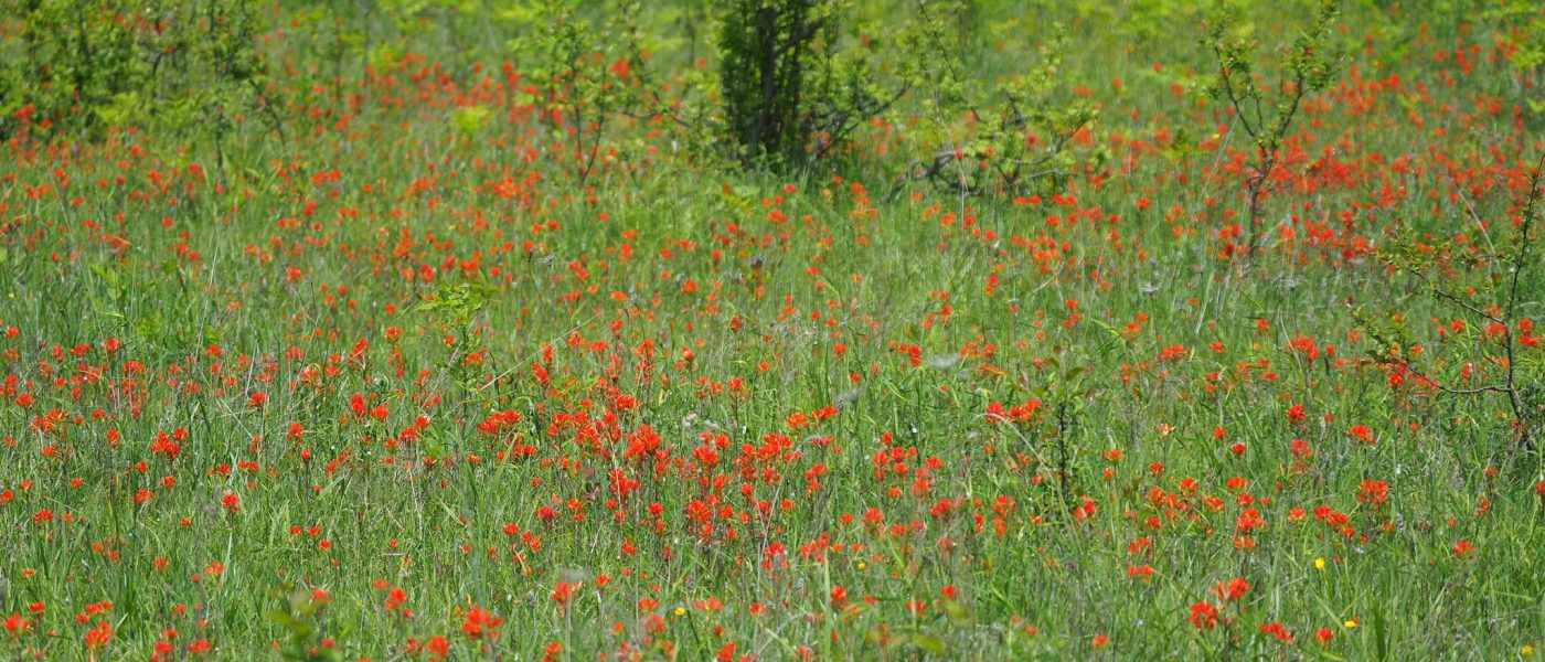 Grassland Habitat for Species at Risk