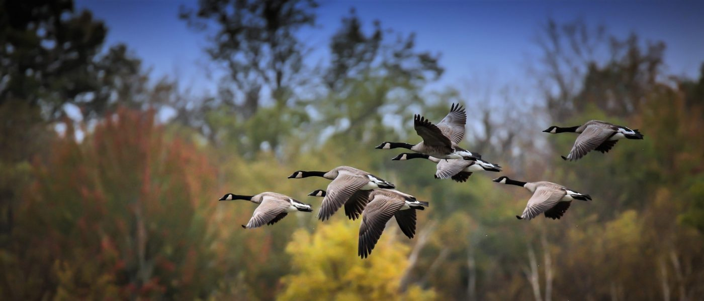 The 49-acre (20-hectare) McDougall Wetland Project is at the back of the Kendall property in Frontenac County north of Lake Ontario, a priority region for waterfowl conservation.