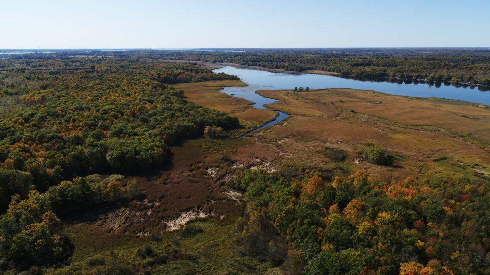Coastal wetland habitat is a vanishing resource across the Great Lakes region.