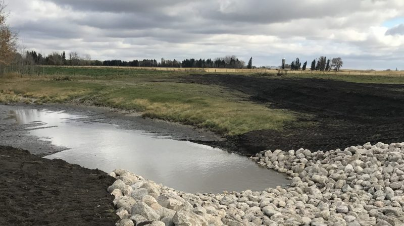 Wetland restoration and Alberta Wetland Policy benefit a farm family