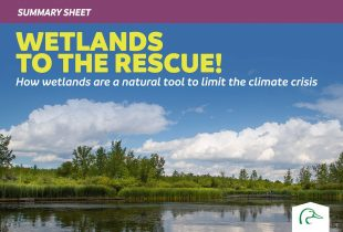 Wetlands to the Rescue! Summary Sheet