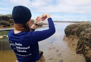 Saving The Fraser River Estuary: A Priority