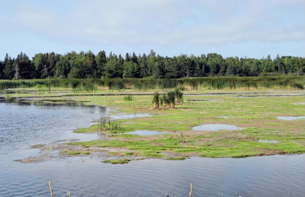 Fullerton's Marsh in Stratford is just one example of coastal wetlands affected by sea level rise.