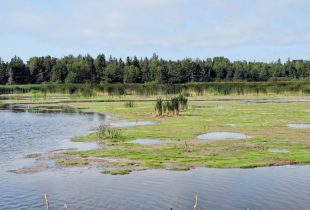 Islanders: don't take wetlands for granted