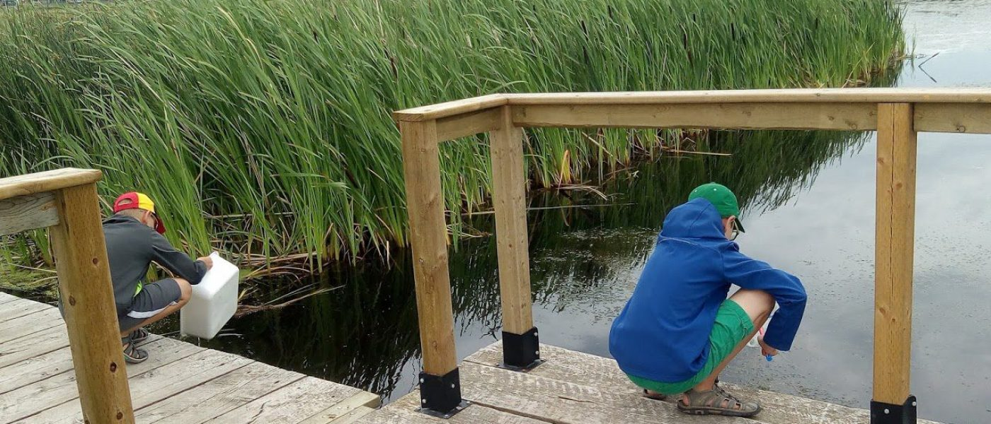 Damon and Graham conduct pond dipping at McKell-Wascana Park