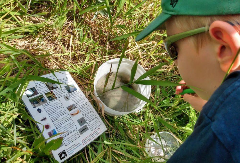 Graham identifies invertebrates he's found while exploring a Regina-area wetland.