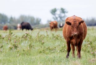 125,000-acre initiative aims to conserve Canadian prairies through collaboration with ranchers