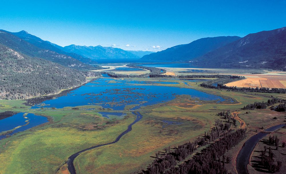 While comprising less than three per cent of B.C.'s coastline, estuaries in B.C. are critical for fish, migratory birds and other wildlife, providing a vibrant ecosystem in which they can thrive.