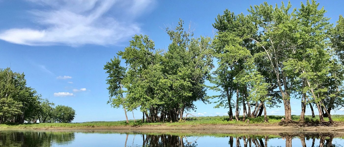Portobello Creek National Wildlife Area habitat along the Saint John River