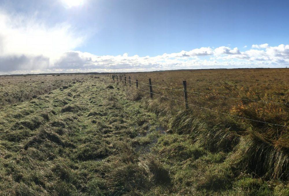 Tantramar Grasslands Co-operative pasture