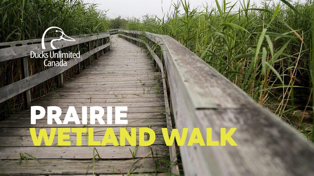 Marshland Walk presentation thumbnail