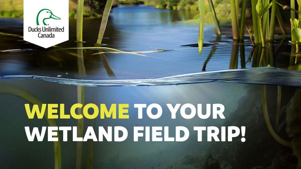 Wetland field trip thumbnail