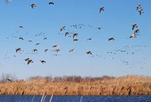 Nature's great educators: what our beloved birds can teach us on World Migratory Bird Day