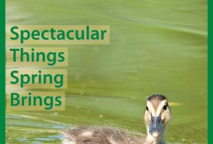 Spectacular Things Spring Brings