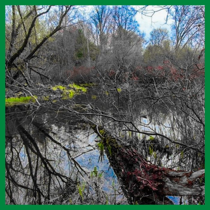 Hodges Pond is a restored near-urban wetland, one in a long list of stewardship projects that are reclaiming the natural heritage of Oxford County.