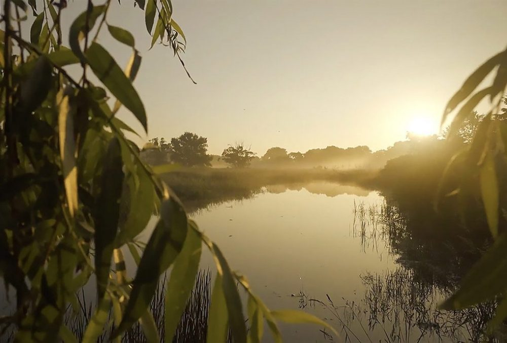 Wetlands offer a diverse range of environmental co-benefits that help us mitigate the impacts of a changing climate.