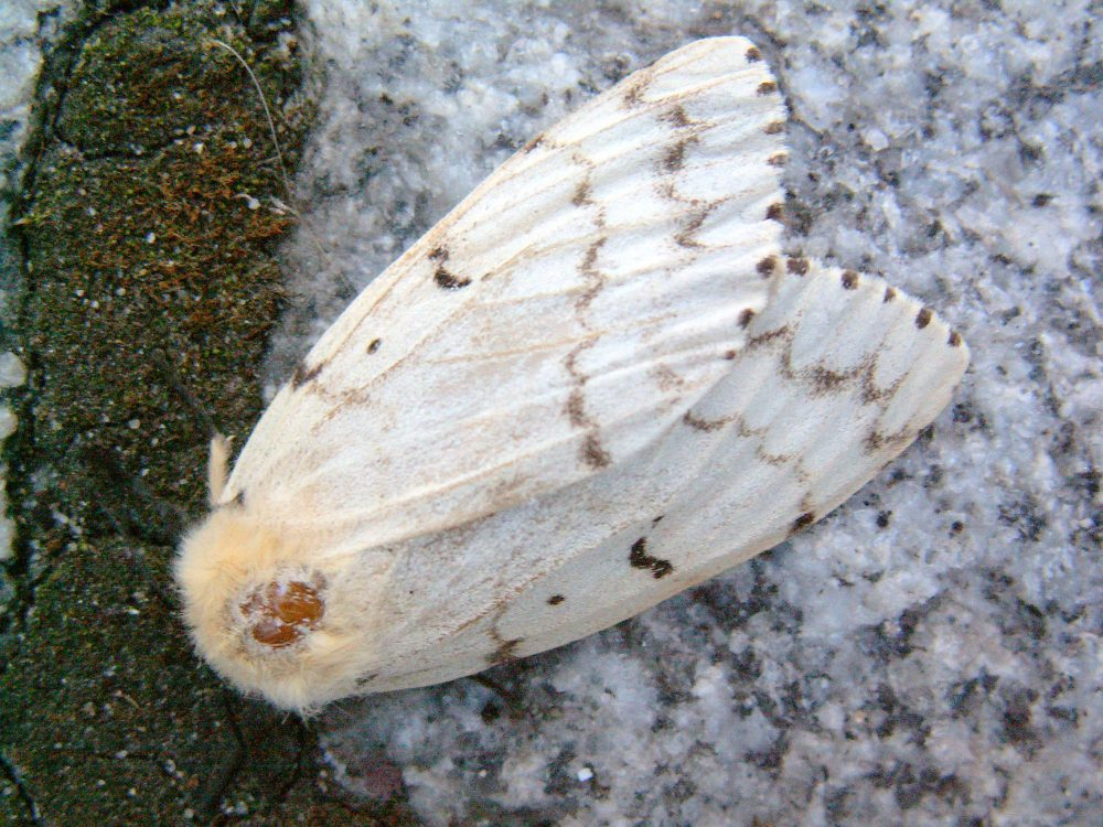 Conserving and maintaining natural areas like wetlands, grasslands and forests creates resilience against disturbances from invasive species like Lymantria dispar dispar moths.
