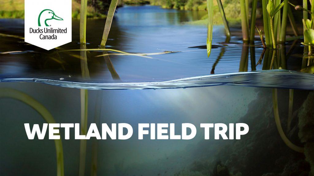 Wetland field trip banner