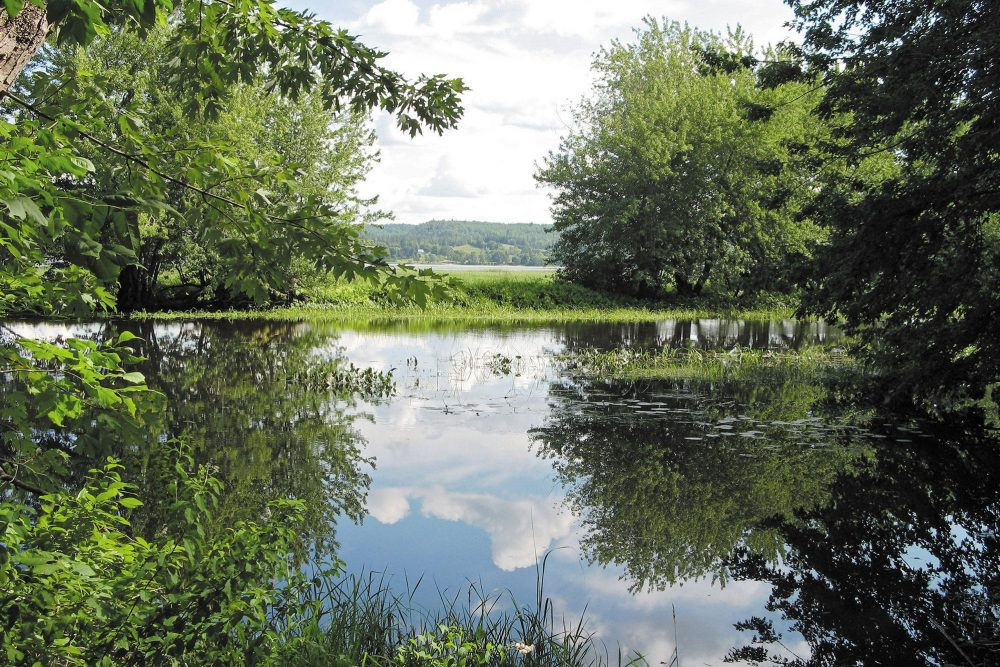 Wolastoq (Saint John River)